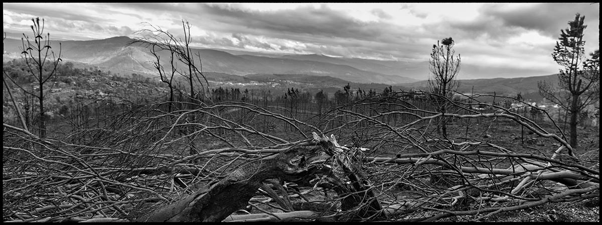 Silence and destruction. It is the legacy of a fire that leaves 35,000 hectares burned in Galicia.