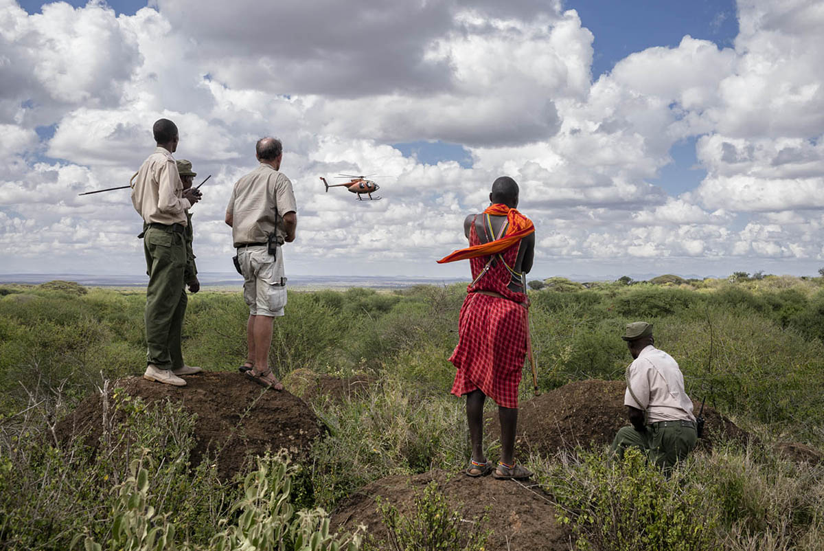 KENIA, AMBOSELI - FEBRUARY 2016: A group of Maasai Rangers and observe the operation of a helicopter trying to shoot a dart at a wounded elephant.